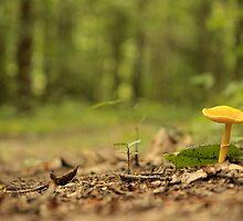 Orange fungi by elasita