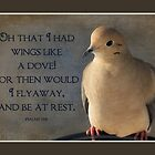 Wings of a Dove by Trudy Wilkerson