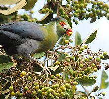 White Cheecked Turaco by Marieseyes