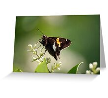 Spotted a Silver Spotted Skipper Greeting Card