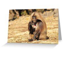 Geladas - Ethiopia Greeting Card
