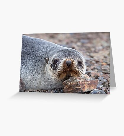 Antarctica Fur Seal Greeting Card