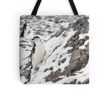 Chinstrap Penguin Tote Bag