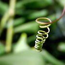 spiral by Floralynne
