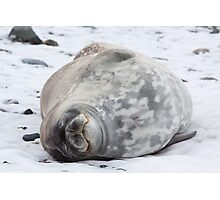 Weddell Seal Photographic Print