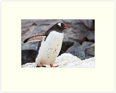 Gentoo Penguin by tara-leigh