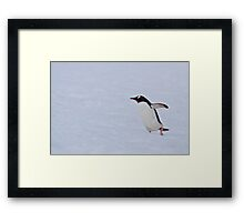 Gentoo in the Snow Framed Print