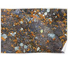 Lichen and Rock Poster