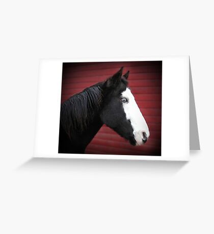Blue Eyed Black and White Paint Horse Greeting Card
