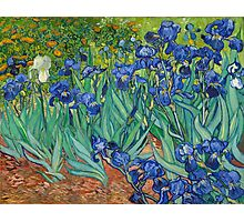 Vincent Van Gogh irisis Photographic Print