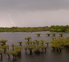 Lightning and Mangrove by William C. Gladish