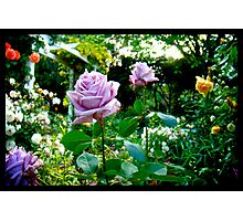 Naik Michel Photography - Hortensia House Garden Purple Flower Roses 001 Photographic Print
