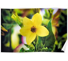 Yellow 5 Petal Wild Flower Poster