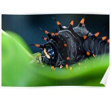 Chomp - Cairns birdwing caterpillar Poster