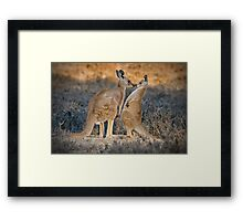 Kissing Kangaroos Framed Print