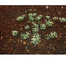 Sequence to 'Friends are like snowdrops' (poem attached) Photographic Print
