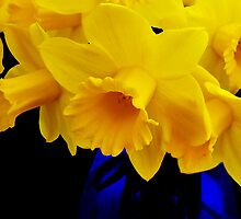 Daffodils by Susie Peek