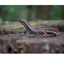 Lizard on a Stump Photographic Print