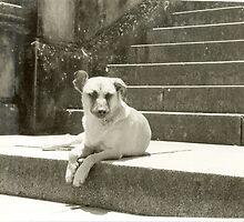 Cachorro na escada by Bia Romi