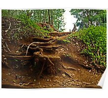 """Woody Trail """"Nature's Staircase"""" Poster"""