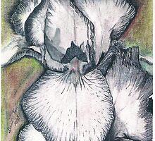 Iris In Minerals by David M Scott