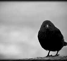 You Just Lost Our Staring Contest by Hallie Duesenberg