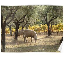 Autumn Sunset with Sheep Poster