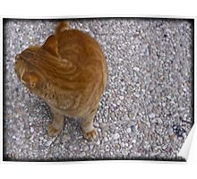Cats Are Like Squirrels in Israel. Poster