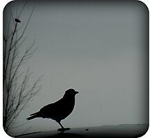 Crow Guard Photographic Print