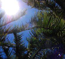 Up at the Sky - Hamilton Island, Whitsundays. by Ukulady