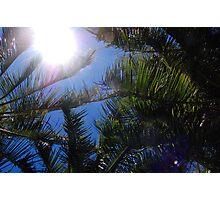 Up at the Sky - Hamilton Island, Whitsundays. Photographic Print