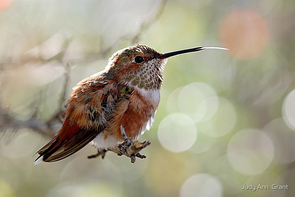 Tongue of a Hummingbird  by Judy Grant