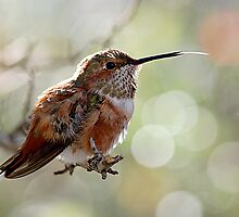 Tongue of a Hummingbird  by Judy Grant