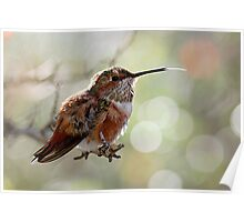 Tongue of a Hummingbird  Poster
