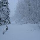 Winter Wonderland. by Christopher Clark