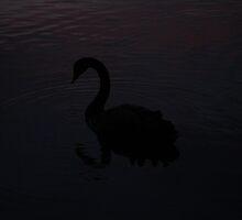 The Black Swan by Salien