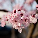 Spring is springing by Coreycw