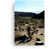 Desert Landscape. Canvas Print