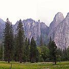 yosemite meadow by Bruce  Dickson