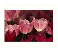 Lovely In Pink Art Print