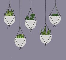 Hanging Succulents and Cacti by Sydney Koffler