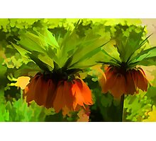 Showy Orange Crown Imperial Flowers - Impressions Of Spring Photographic Print