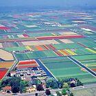 Flower  Carpet ,  Netherland by yoshiaki nagashima