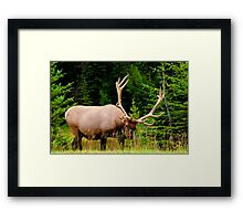Wildlife Along Icefields Parkway Framed Print