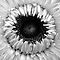 FOLIAGE or FLOWER Shapes in BLACK & WHITE only