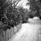 Long Walk Home by Rhonda Blais