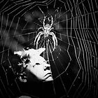 There's a Spider by Cheryl  Rose
