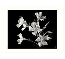 Oleander In Black and White Art Print