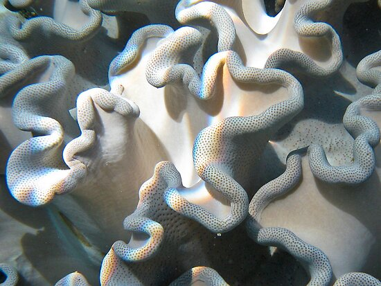 Underwater curls (VIEW LARGE) by Karen Stackpole