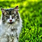 The Love Cats by Craig Shillington
